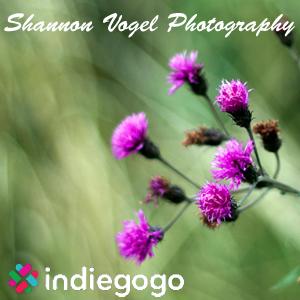 Shannon Vogel Photography IndieGoGo.com