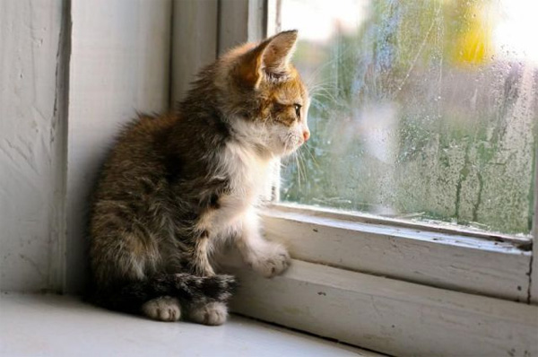 Kitten staring out at rain
