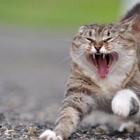 Angry-Cat-Photo-2f396d7